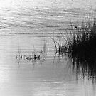 Titicaca Reflections by Marco Vegni