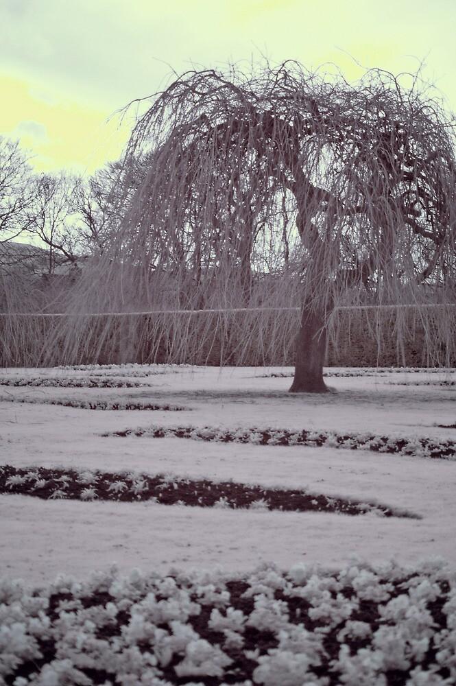 Infrared winter willow, Edinburgh by onlyalice