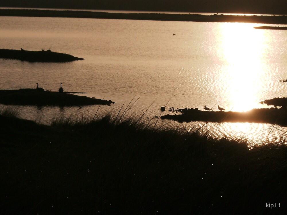 walney south nature reserve by kip13