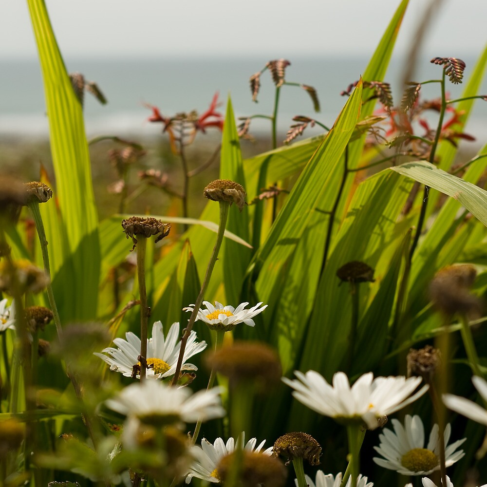 Wild Flowers by TimbosPics
