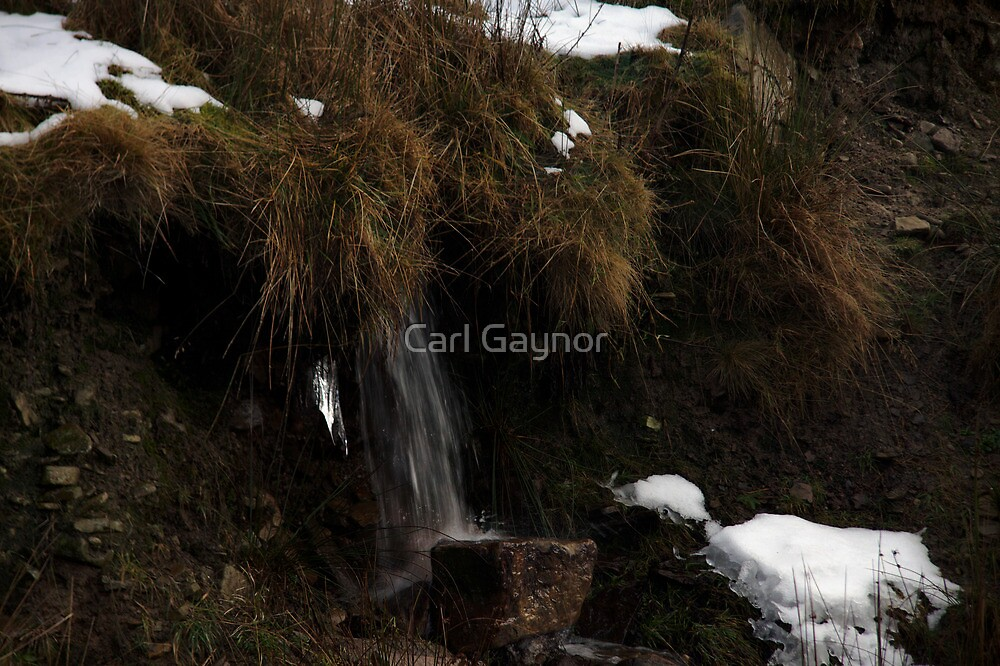 Plunge Brook - A View  by Carl Gaynor