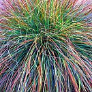 A Swirl of Grass IV by Mike Solomonson