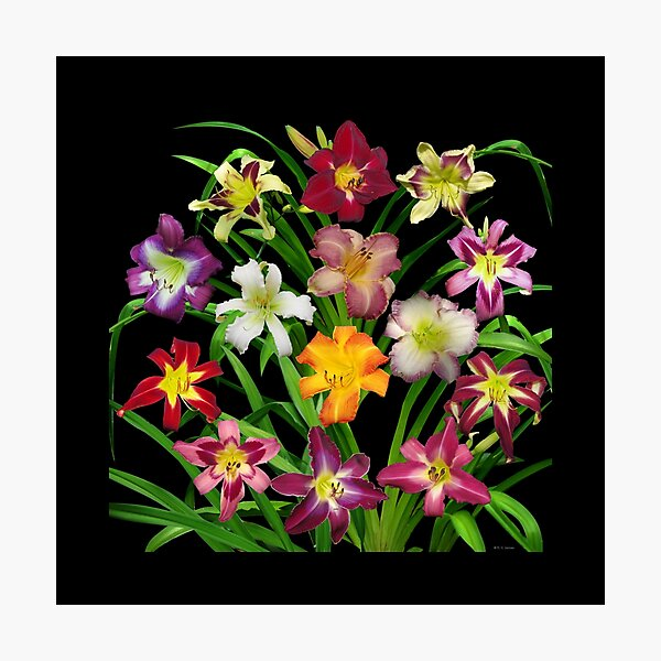 Display of Daylilies II Photographic Print