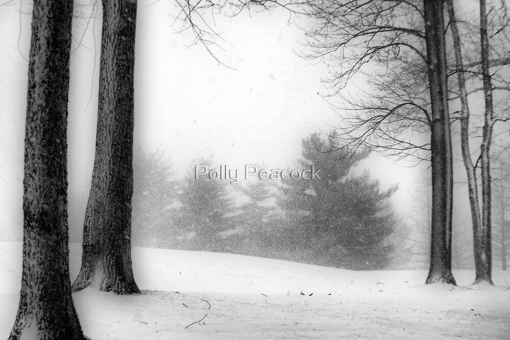December Blizzard by Polly Peacock