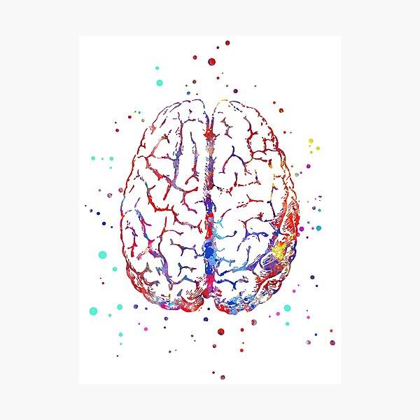 Brain anatomy, medical art, brain top, brain front, watercolor Brain Photographic Print
