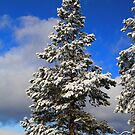 Snowy Tree by Steve Hunter