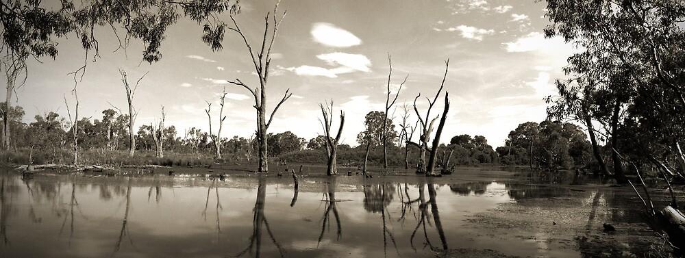 Wetlands by Kay Coates