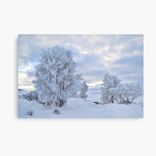 Winter Wonderland, Glencoe Metal Print