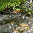 nature art #5, the flow by stickelsimages