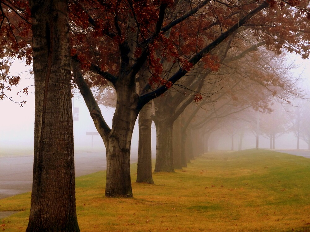 Autumn Fog by atoth