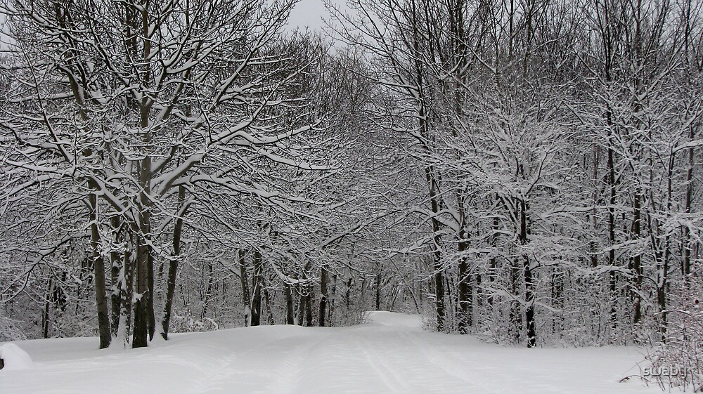 Snowy Branches by swaby
