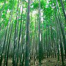 Bamboo in Spring, Arashiyama by hinting