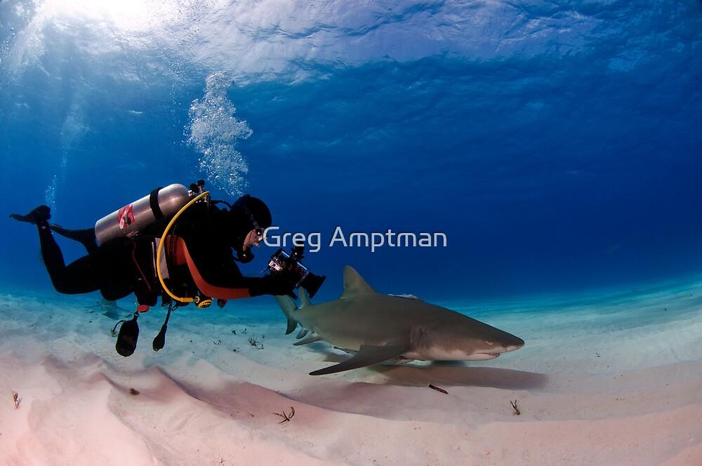 Diver with Lemon Shark by Greg Amptman