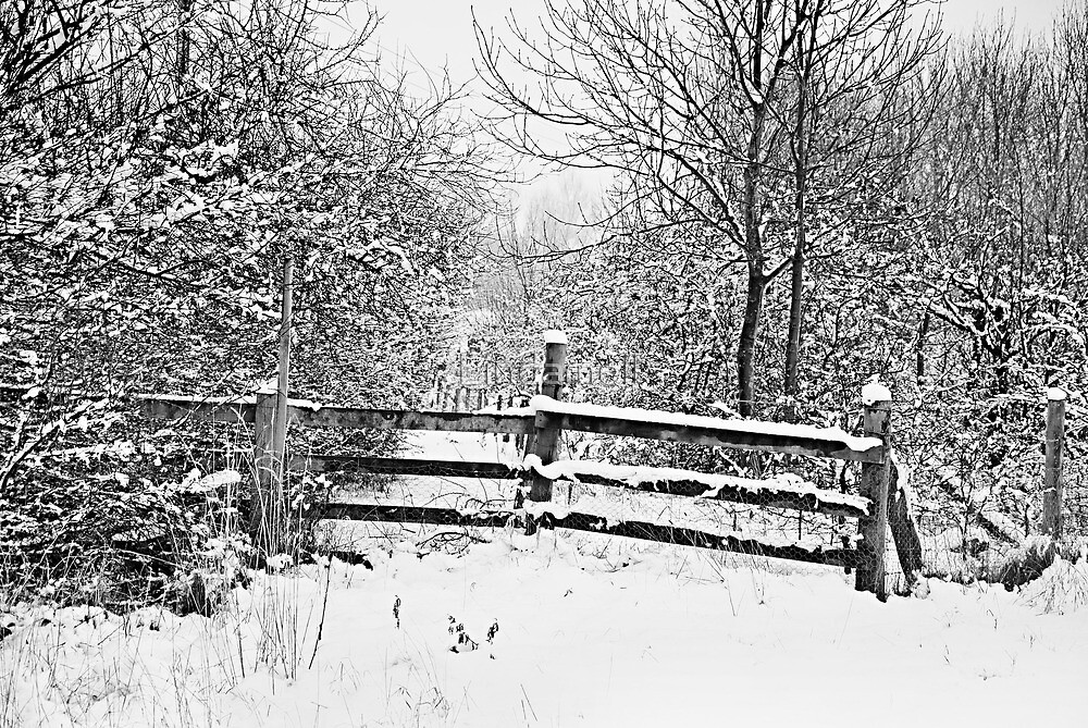Snowy Path by Lindamell