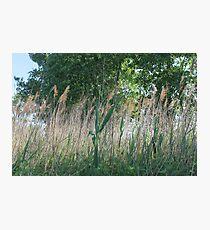 #nature #grass #landscape #outdoors #leaf #summer #wood #environment #tree #field #bright #season #horizontal #plant #nopeople #ruralscene #nonurbanscene #day Photographic Print