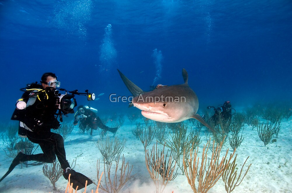 Say Cheese by Greg Amptman