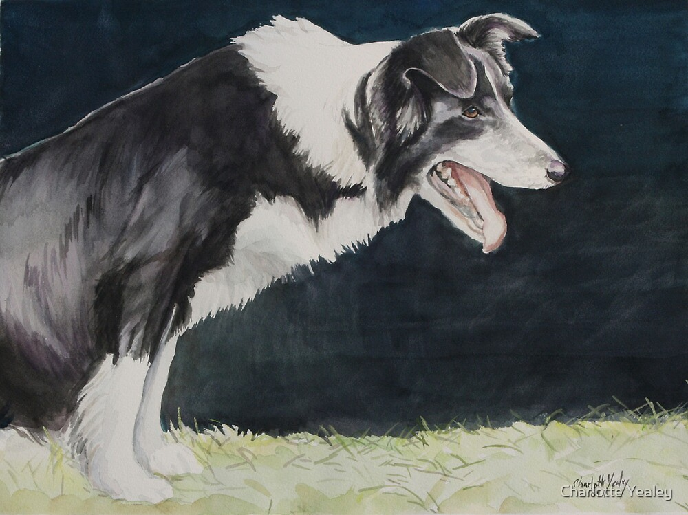 Always Ready Border Collie by Charlotte Yealey