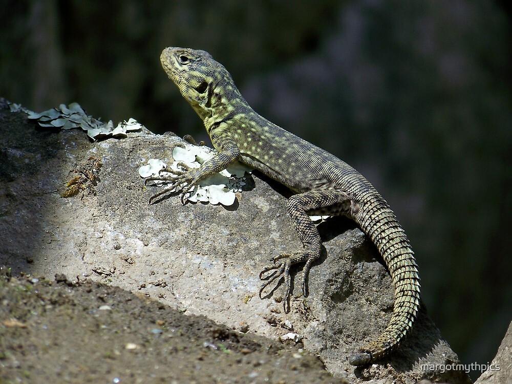 Lizard of Machu Picchu by margotmythpics