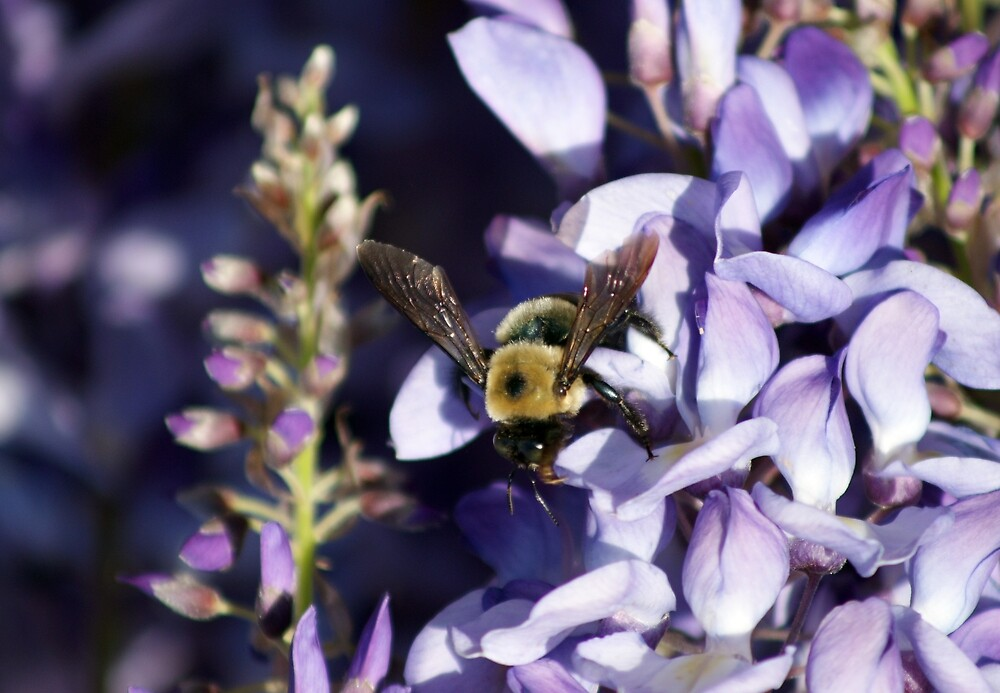 Let It Bee by Linda Yates