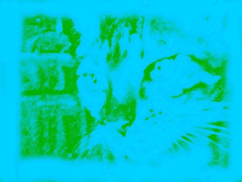 Blue Kitten by dnlkisa