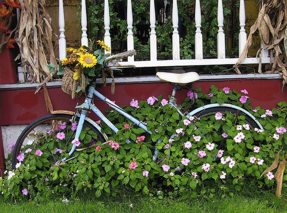 Old Bicycle & Impatiens by Siobhan Royack
