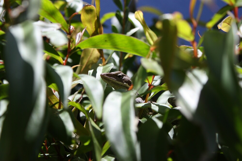Hiding Lizard by wattsy6025