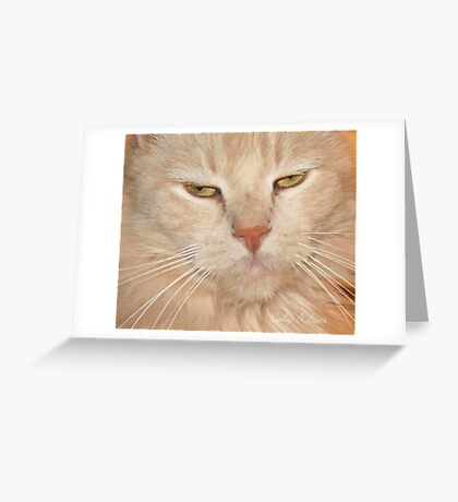 Katie Kat Greeting Card