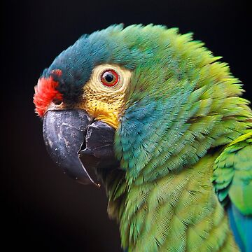 Parrot  by valentina9