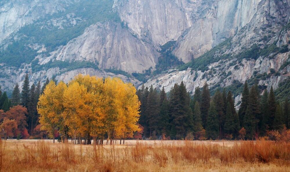 Yosemite Valley by DanielPhoto