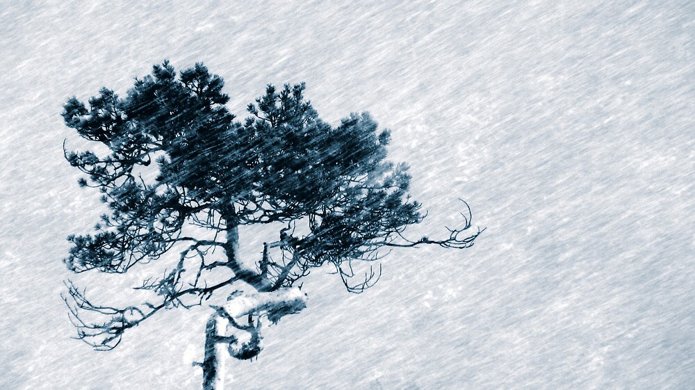 28.12.2009: Snowfall I by Petri Volanen