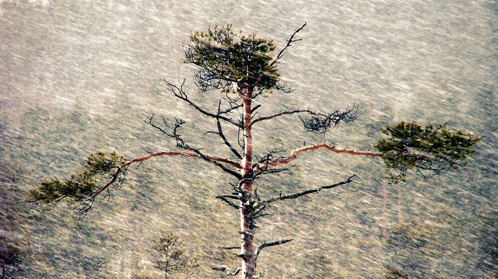 28.12.2009: Snowfall II by Petri Volanen