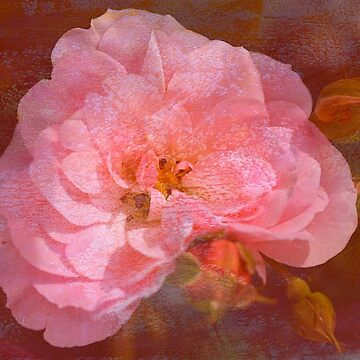 Vintage Pink Textured Rose by bubbleblue