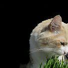 Cat 'n Grass by Ellen Cotton