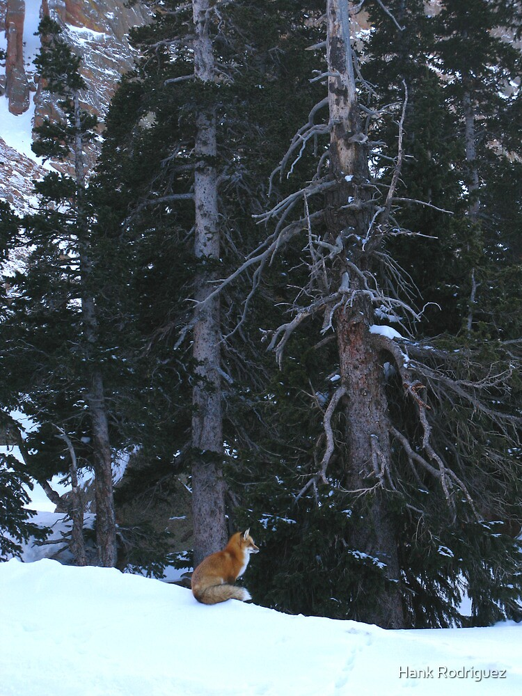 Little Red Fox at Pike's Peak  by Hank Rodriguez