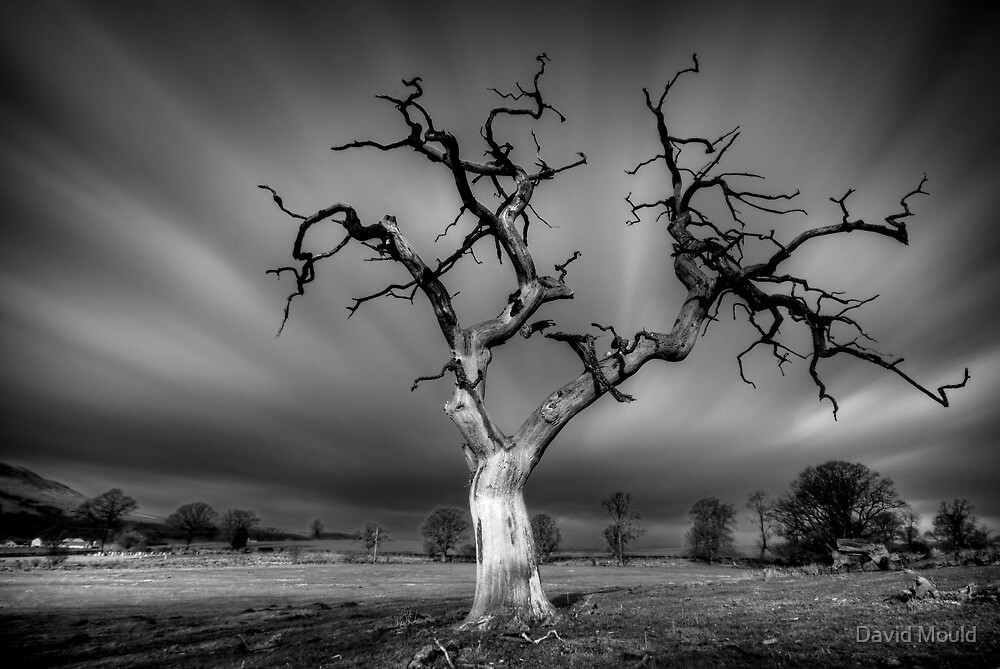 Dead... but full of life...Fintry Tree mono conversion by David Mould