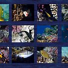 Red Sea Sealife Collage 6 by hurmerinta