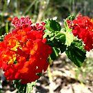 Blazing Red by bigjason56