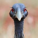 whiskered bird by Paulo van Breugel
