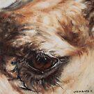 Rex eye by alstrangeways