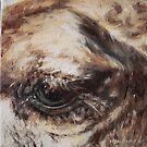 Brown camel eye by alstrangeways