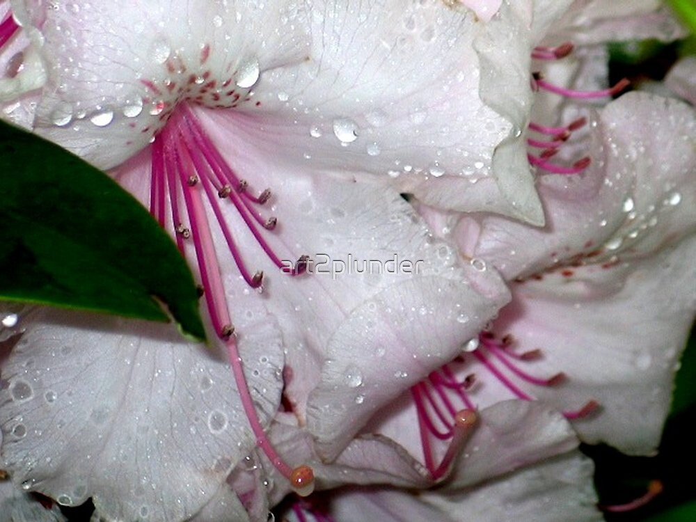 Crying Rhodies by art2plunder