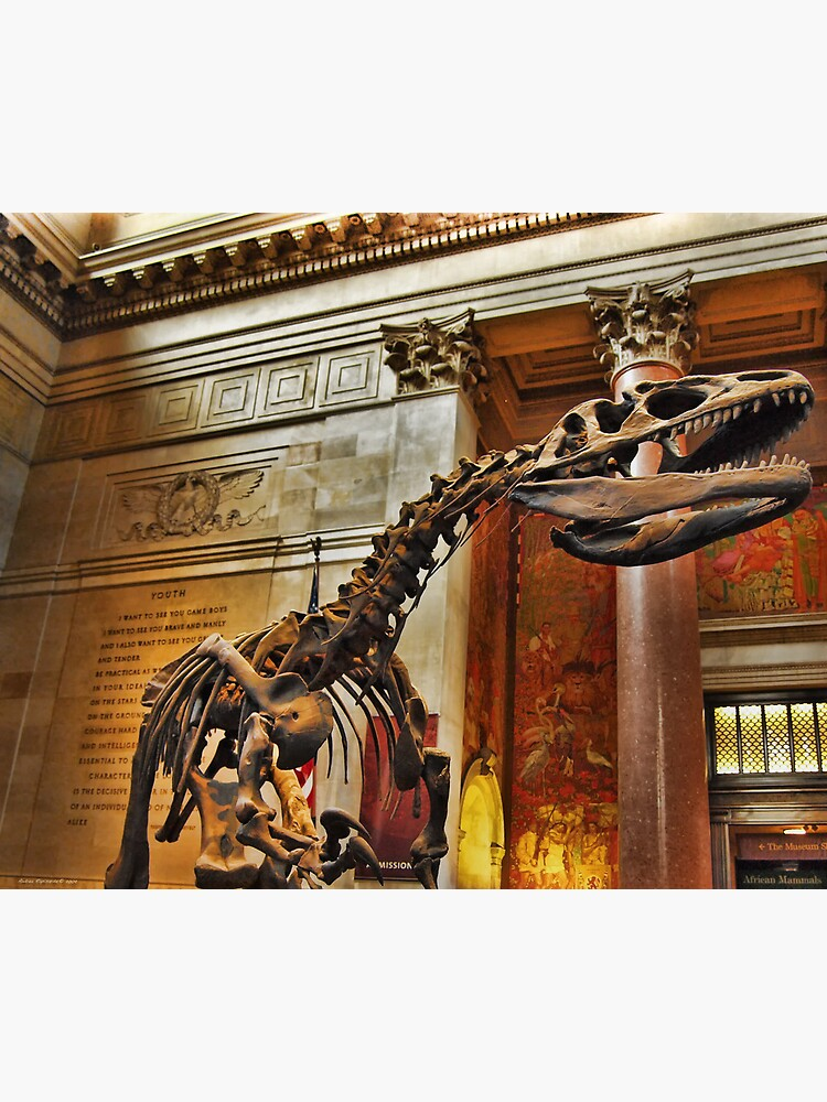 American Museum of Natural History by rapis60