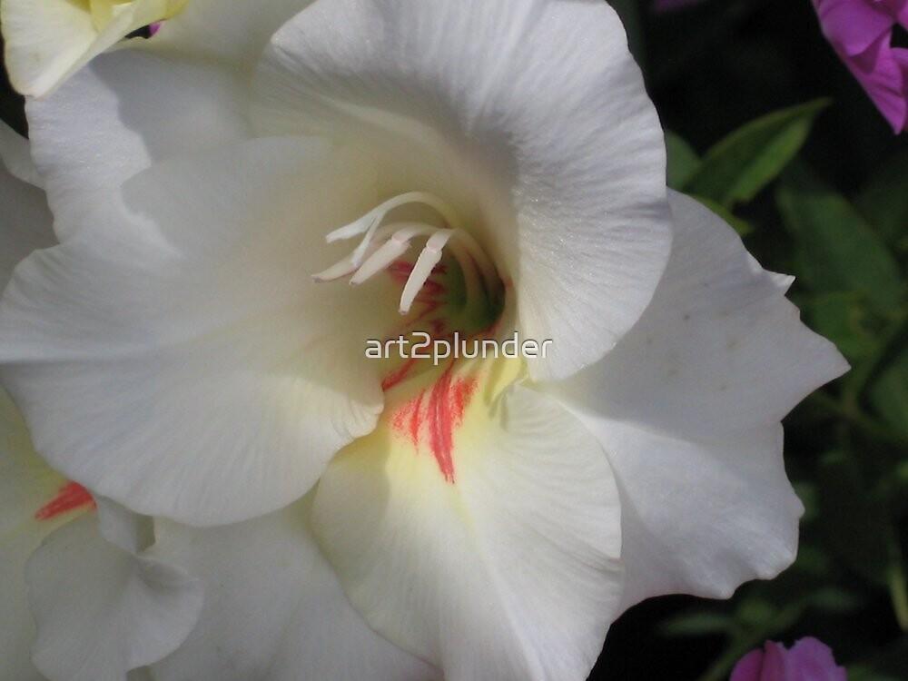 White Gladiola by art2plunder