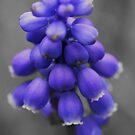 Just blue by Martina Fagan