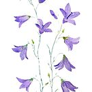 purple harebell wildflower watercolor by ColorandColor