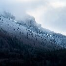 First snow in Chartreuse by Patrice Mestari
