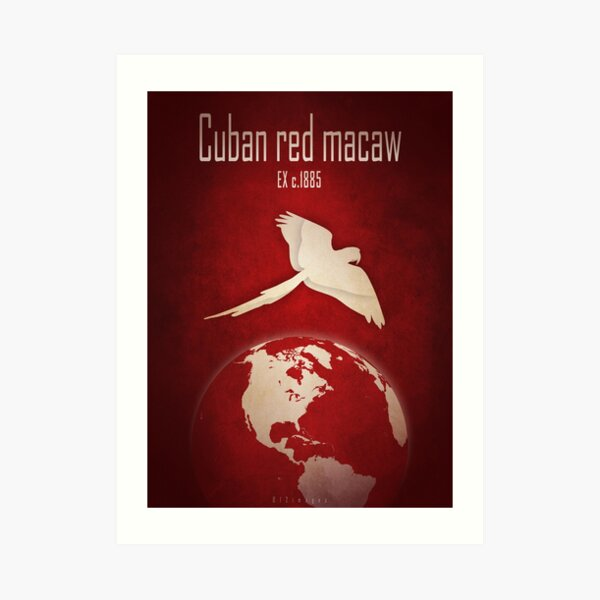 Cuban macaw - extinct animals Art Print