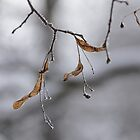 Frozen Basswood Leaves by denis-romanov