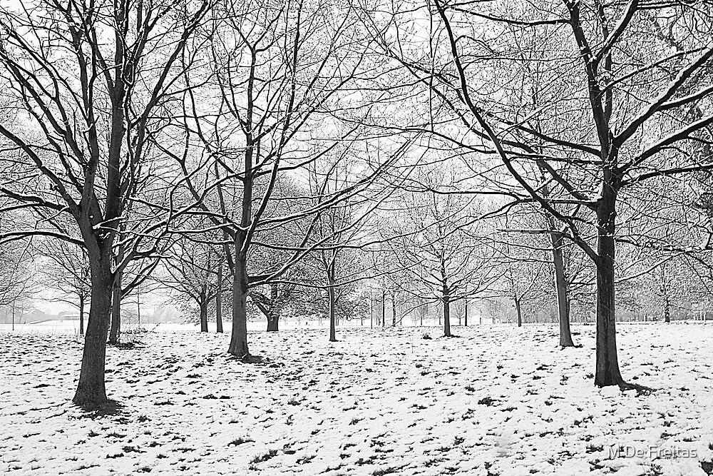 Regents Park by M De Freitas