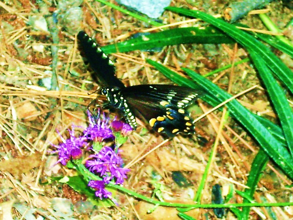 Butterfly by AndyJay
